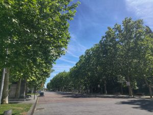 A tarmac road lined with trees